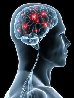 Pleasure Brain Signals Disrupted in Fibromyalgia Patients- Chiropractic News